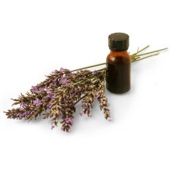 Lavender Oil